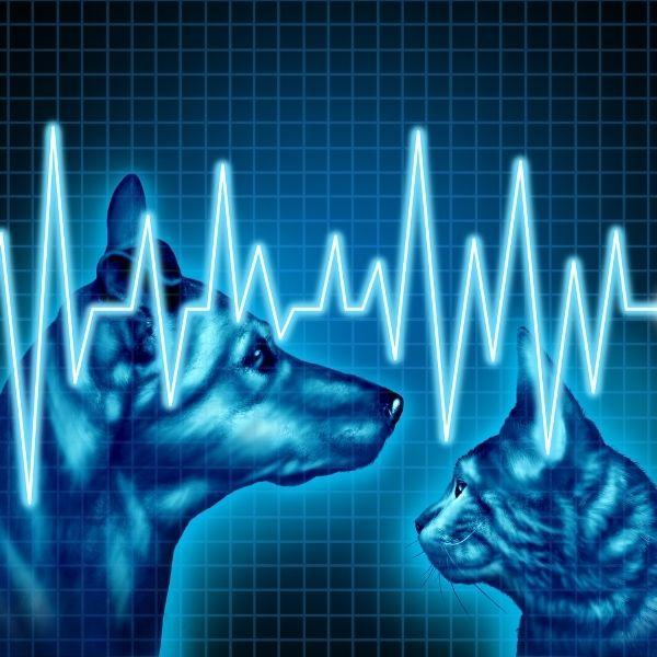 imagen de salud y bienestar de tu Mascota