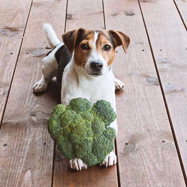 imagen de salud y bienestar de tu Mascota veterinaria puerto santa maria cadiz