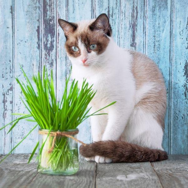 imagen de cuidado salud gatos veterinaria cadiz