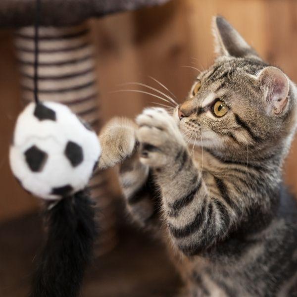 imagen de Salud y bienestar de gatos