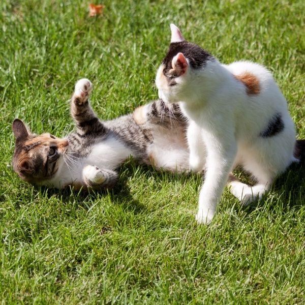 imagen de ambiente ideal para gatos