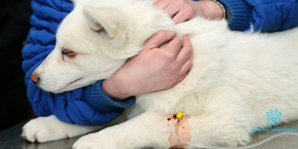 imagen de oncologia veterinaria clinica y hospital santa maria