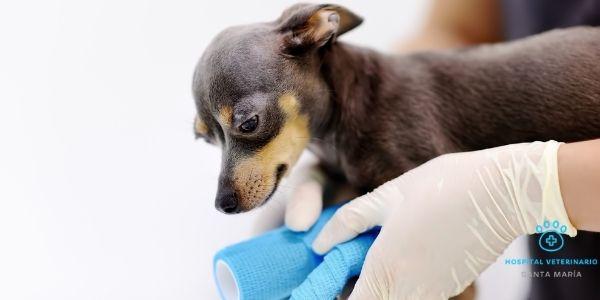 imagen de traumatologia clinica veterinaria santa maria cadiz
