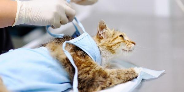 imagen de traumatologia y fracturas clinica veterinaria santa maria cadiz