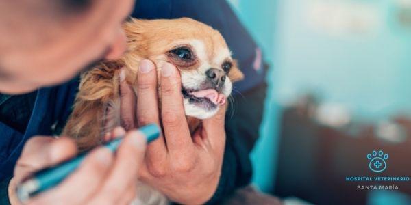 imagen de oftalmologia veterinaria clinica santa maria cadiz