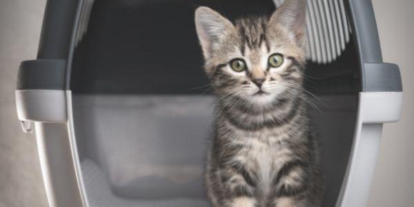 imagen de viajes con mascotas en avion requisitos hospital veterinario santa maria