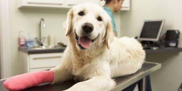 imagen de cirugia veterinaria puerto santa maria