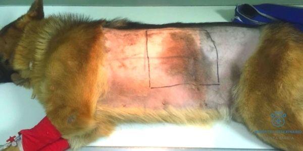 imagen de cirugía torácica hospital veterinario santa maria