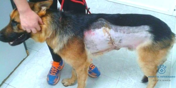 imagen de cirugia toracica veterinaria cadiz