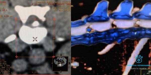 imagen de Neurología y Neurocirugía veterinaria santa maria hospital veterinario santa maria