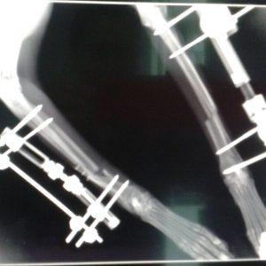 imagen de Casos Reales e Imágenes del Hospital Veterinario y Clínica Veterinaria Santa María en Cádiz