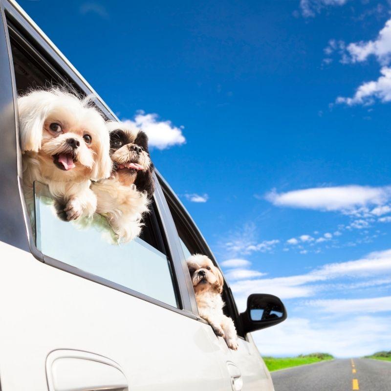 imagen de consejos para viajar con tu mascota